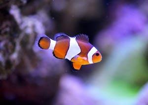 Carlsbad Aquarium