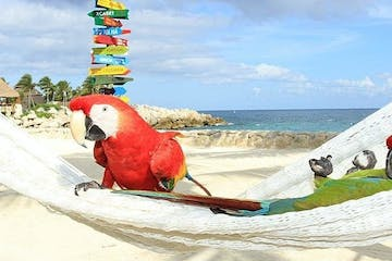 a parrot sitting on top of a beach