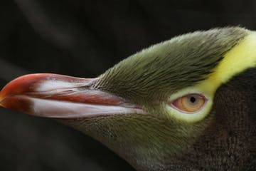 a close up of a bird