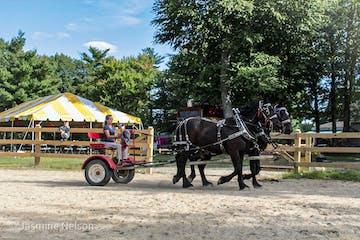 driving Percheron horses
