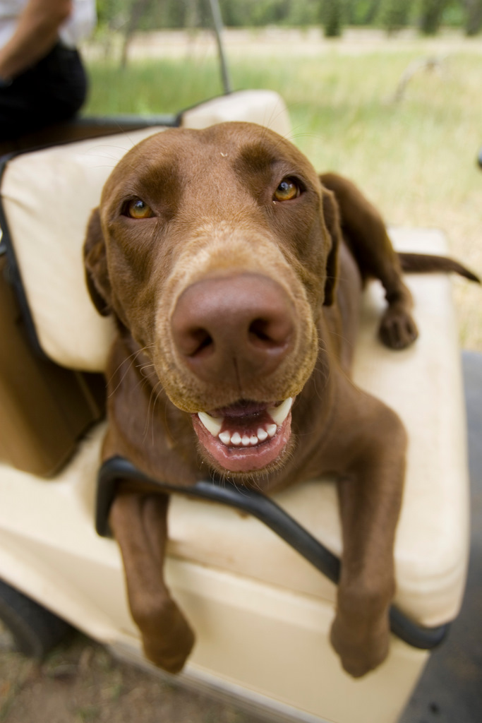 A dog rides in a golf cart at Soaring Tree Top Adventures.