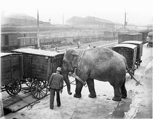 a large elephant standing next to a building