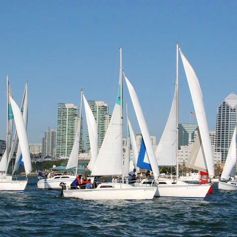 Sailboat fleet cruising in San Diego