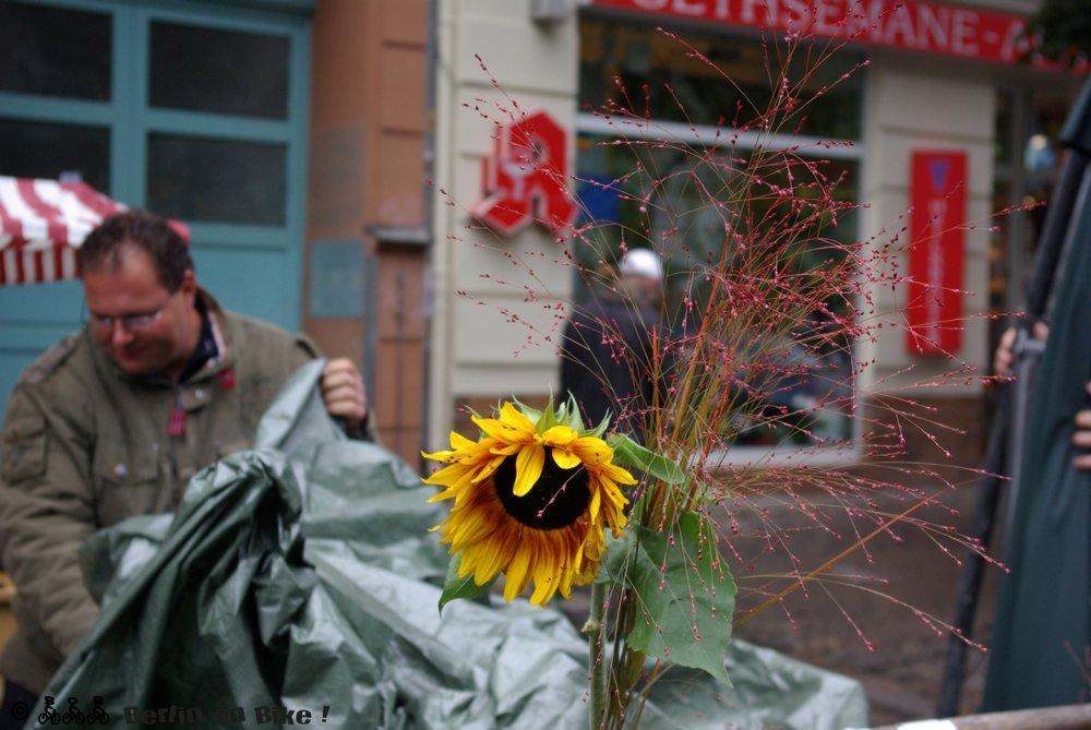 Mann Sonnenblume
