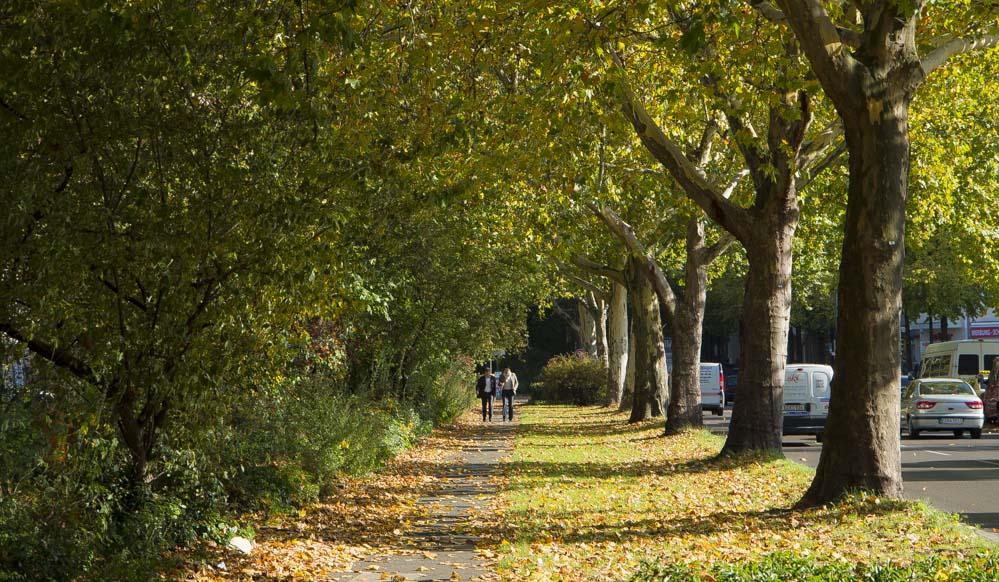 Herbst Baum Blätter
