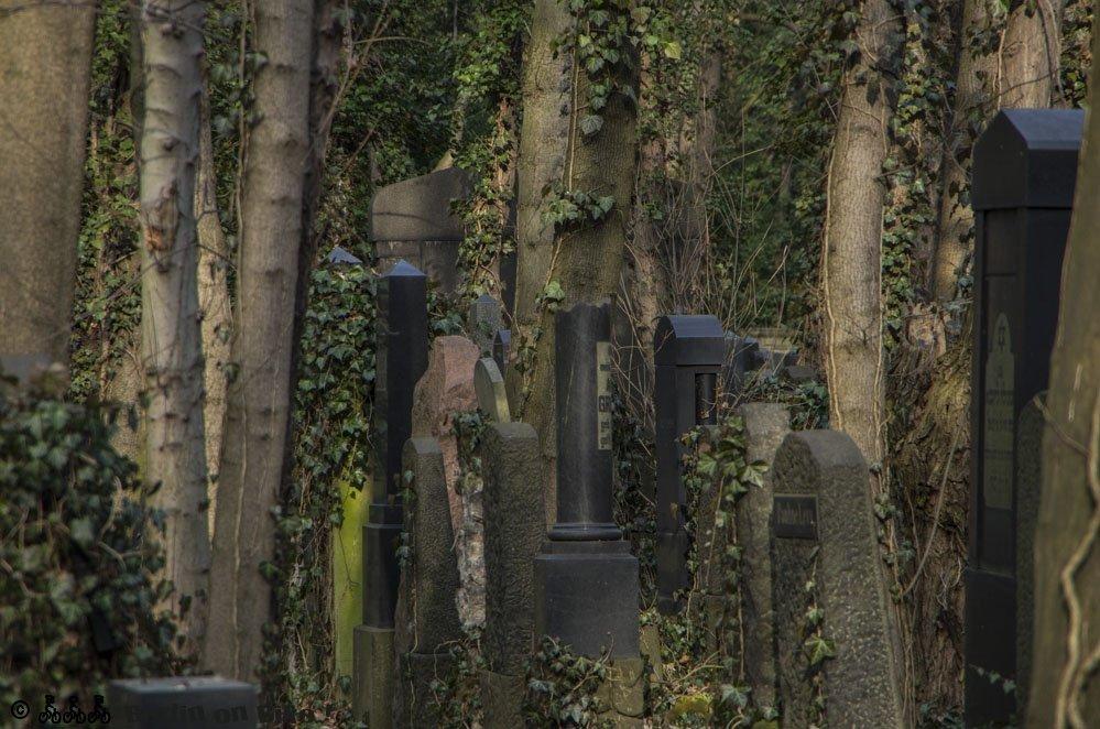 Jüdischer Friedhof Weissensee: verfallene und überwucherte Grabsteine