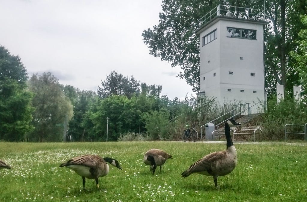 Minenfelder zu Gänseblümchen könnte man dieses Foto überschreiben hätte es in Berlin tatsächlich Minen gegeben. So bleibt nur die schöne Symbolik friedlich weidender Gänse vor dem Wachtum.