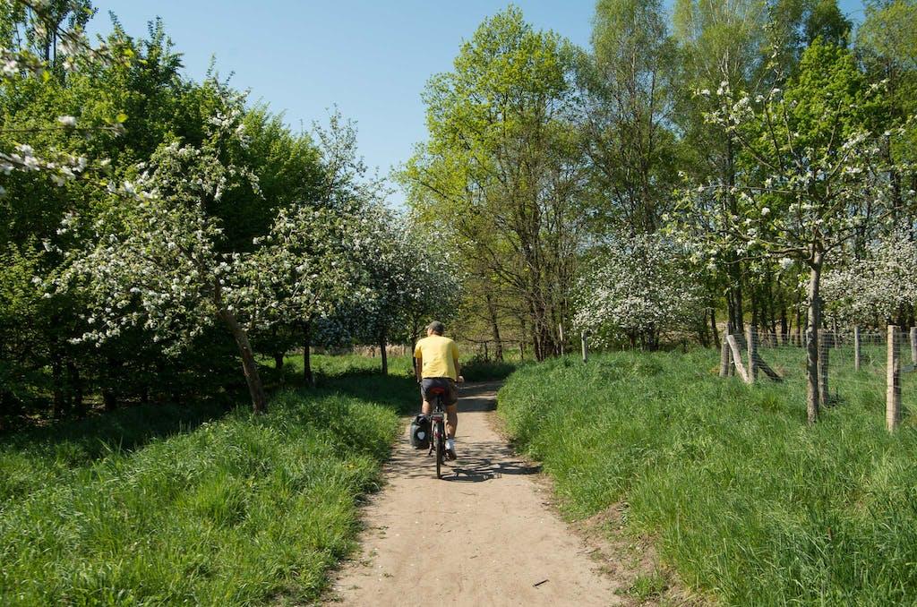 Beste Radtour-Kulisse: die Brandenburger Apfelblüte.