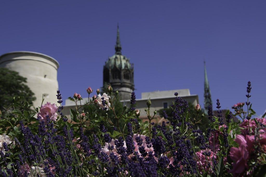 Die Parks von Wittenberg punkten im Lutherjahr mit großer Blütenpracht.