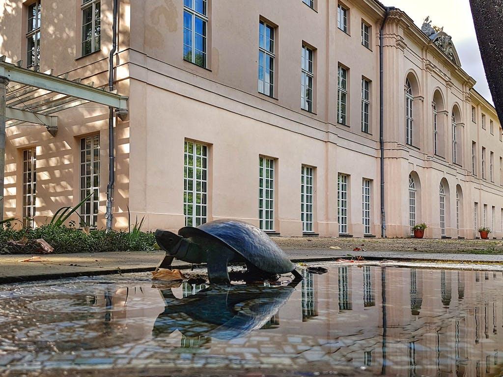 Schildkröte am Schloss Schönhausen