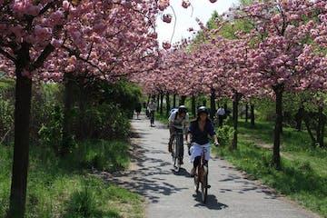 Radler Krichblüten