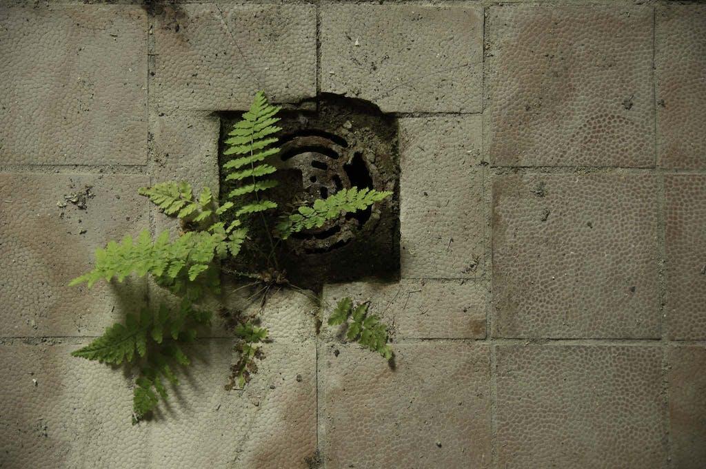 Ein Farn wächst aus dem Abfluss eines verlassenen Gebäudes in Brandenburg