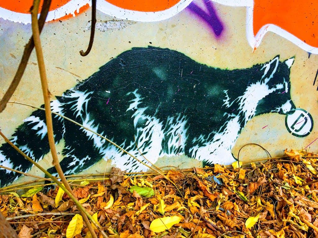 Waschbär Streetart am Pankeufer