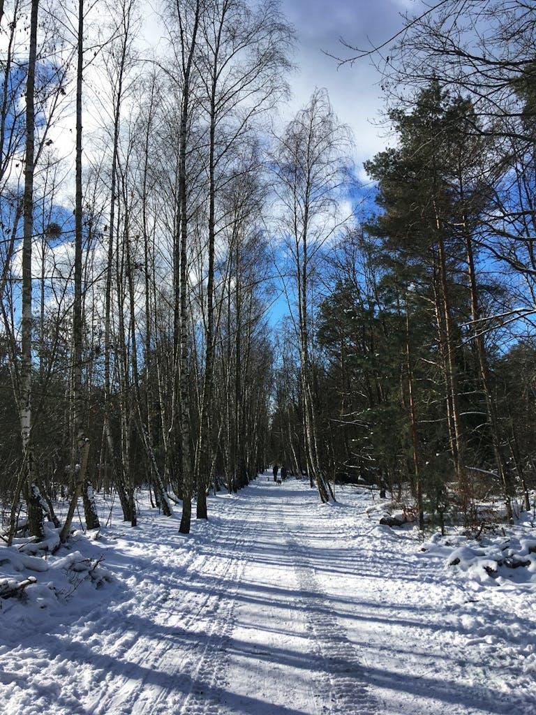 Ehemaliger Grenzstreifen zwischen Kleinmachnow und Zehlendorf