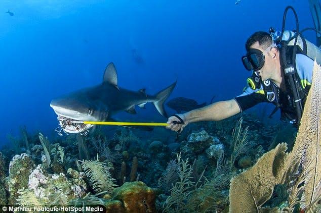 Lionfish-fed-to-Shark