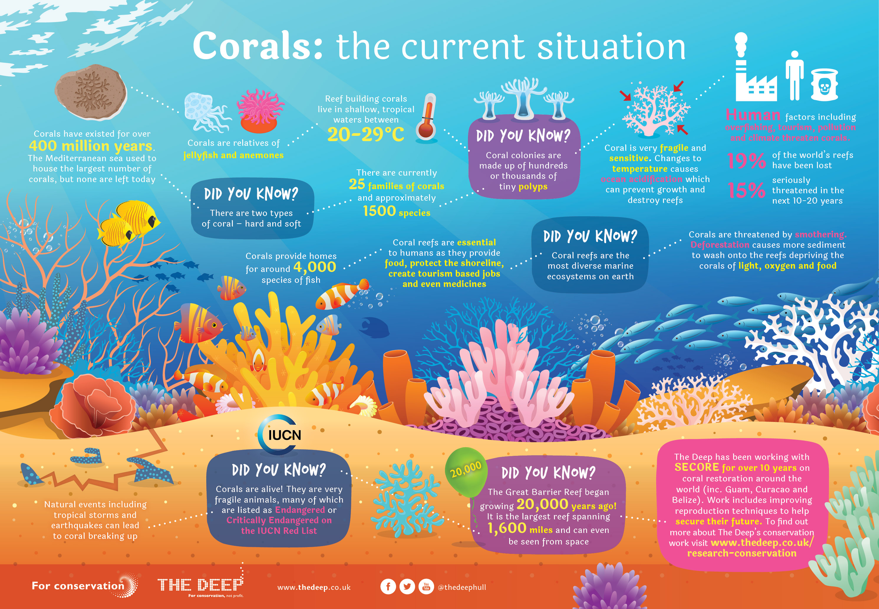 5 amazing facts about coral reefs reefci
