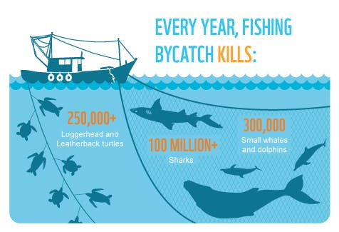 overfishing fish and marine ecosystem Overfishing is a threat for marine ecosystems because a decrease in number of a species will effect the marine food web disrupting the whole ocean if overfishing causes a specie to become extinct in the marine ecosystem then it will have one of the species in the ocean to become overpopulated once one specie becomes.