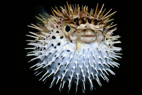 a close up of a fish