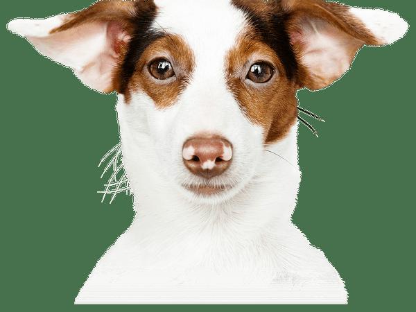 a close up of a dog looking at the camera