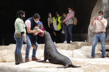 a person standing in front of a seal