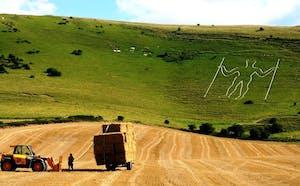 a herd of cattle walking across a grass covered field