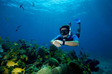 Cancun reefs snorkeling