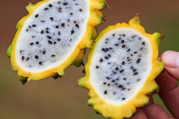 a hand holding a kiwi fruit on a plate