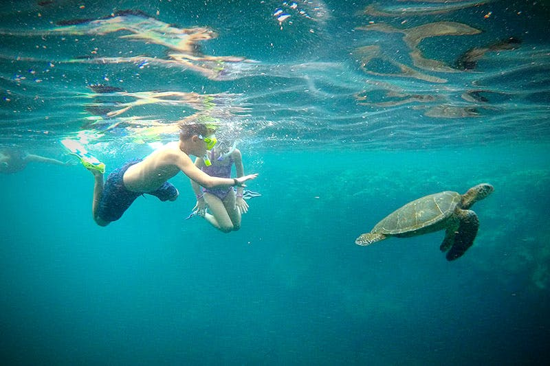 Na Pali Coast Snorkeling with turtles