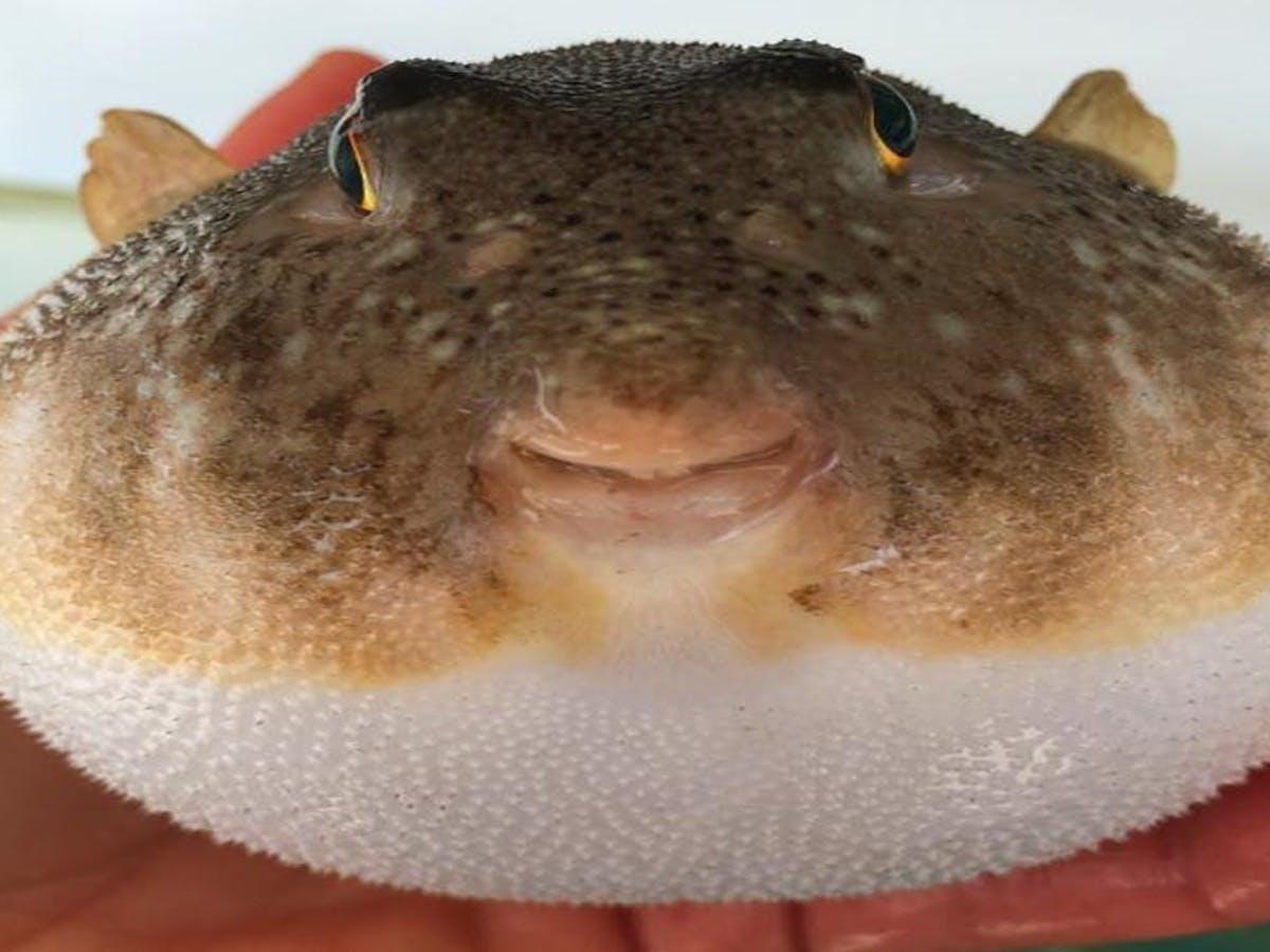 a close up of a stuffed animal