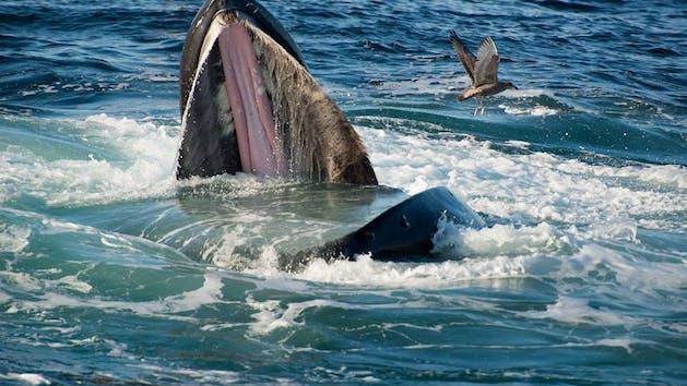 Whale Watching Tour In Montauk Ny Viking Fleet