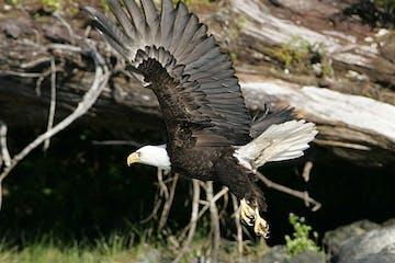 a bird standing on a rock