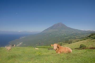 a cow standing in a field with a mountain in the background