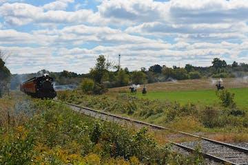 a train on a lush green field