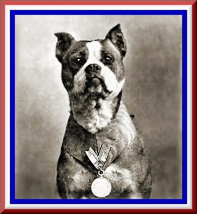 Ghosts of New Haven Green Blog 2a Sergeant Stubby Standing Tall at New Haven Green