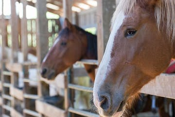 a close up of a brown horse standing next to a fence