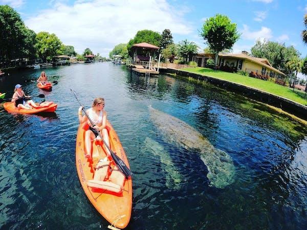 Kayaking with manatees at Paddles outdoor Rentals