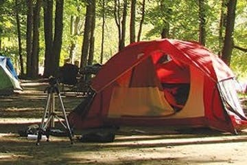 a tent in a forest