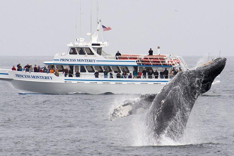 San Francisco Bay Whale Watching Tours