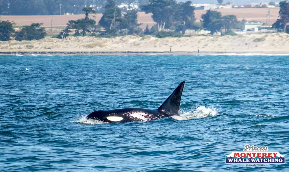 Tuesday September 19, 2017 | Princess Monterey Whale Watching