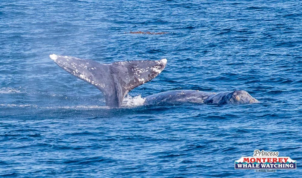 Archive: Sat Dec 2018 | Princess Monterey Whale Watching