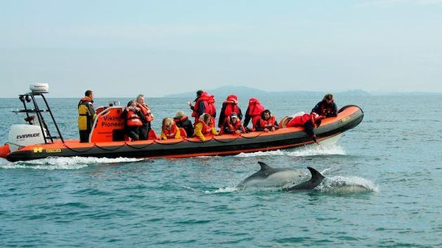speed boat with dolphins