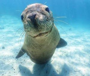 a close up of a sea lion