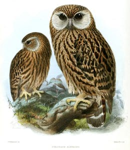 a close up of an owl
