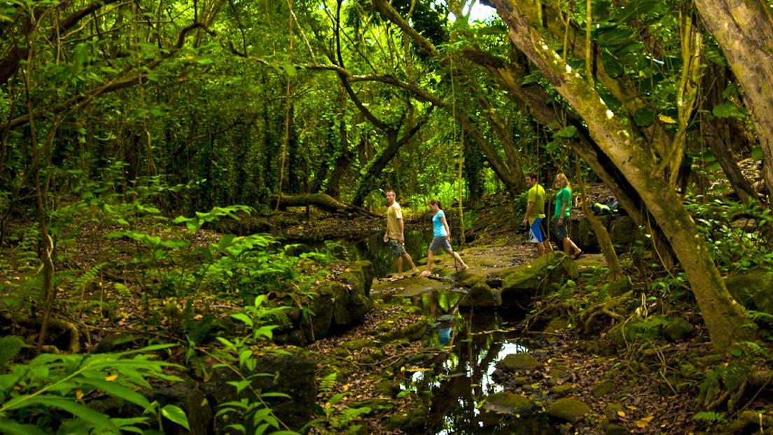 Wailua Waterfall Kayaking Tour with Outfitters Kauai