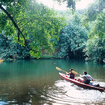 A couple kayaking in the jungle