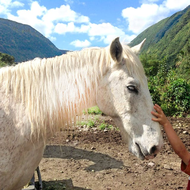 A kid pets a horse on one of our tours