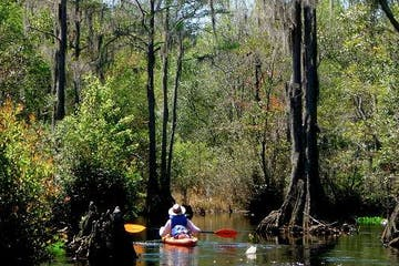 a group of people in a boat on a river surrounded by trees