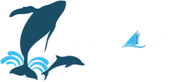 Capt. Dave's Dolphin & Whale Watching Safari