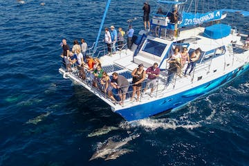 Whale watching boat Manute'a with dolphins