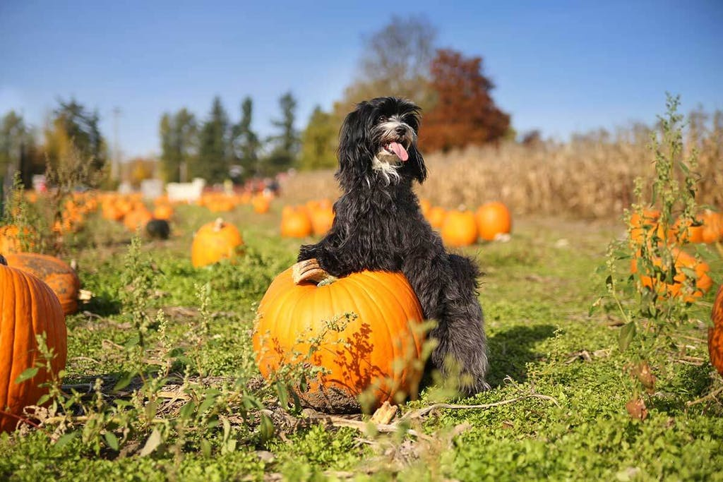 Visit to Pumpkin Patches is a great Dana Point Activity in the Fall